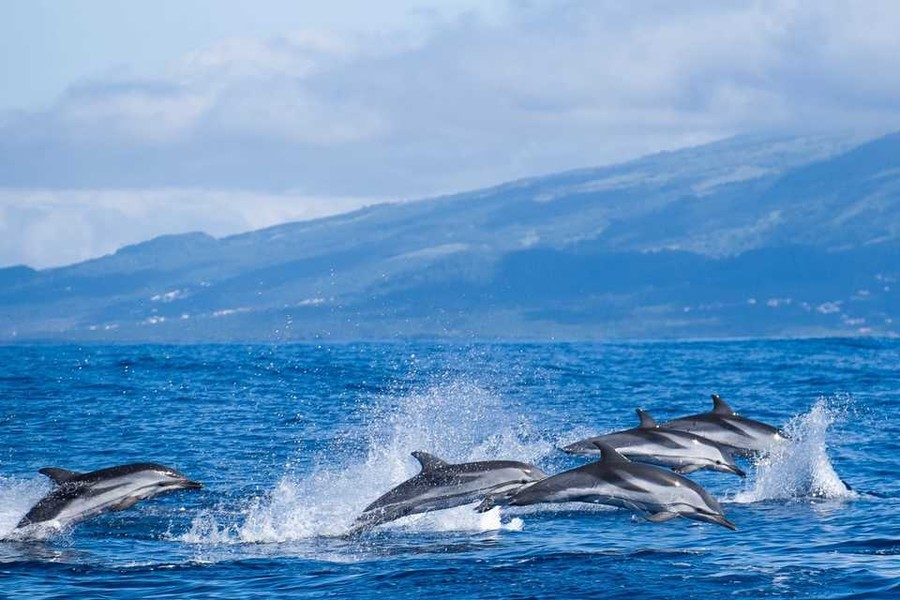 картинки с морем островом и дельфинами