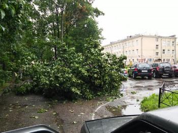 В Петербурге сильный ветер повалил деревья, сады и парки закрылись