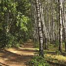 Комсомольский парк Тулы