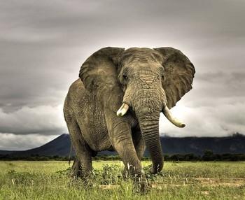 В Зимбабве слон затоптал туристку из Германии