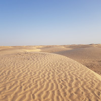 Прогулка на верблюдах по Сахаре