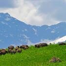 Кавказский природный биосферный заповедник