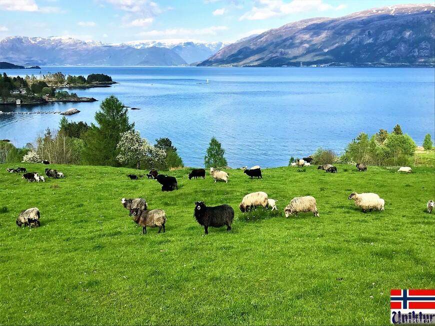 Норвегия со вкусом