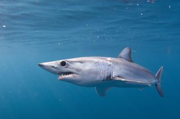 В Калифорнии акула напала на ребёнка
