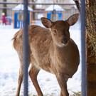 Казанский зооботанический сад