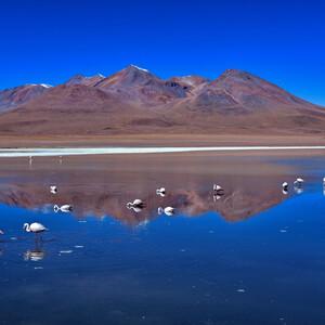 По Боливии галопом