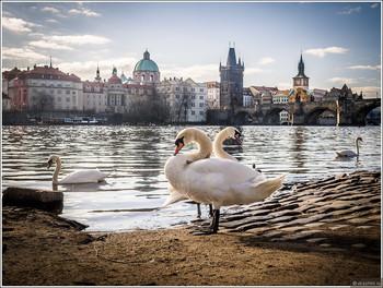 В Праге построят новую канатную дорогу над Влтавой