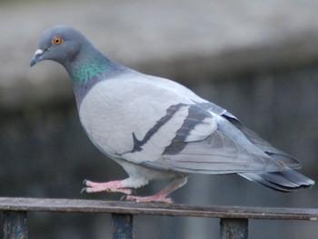 В Бангкоке за кормление голубей грозит тюремный срок