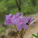 Экологический сад Нантьян