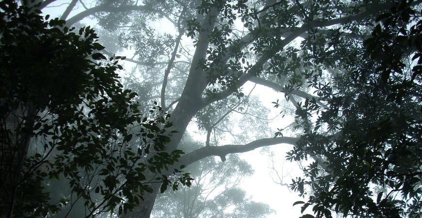 Тропический сад Нантьян