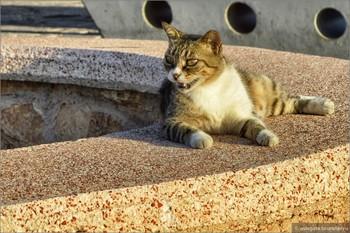 На Кипре будут кормить котов в специально оборудованных местах