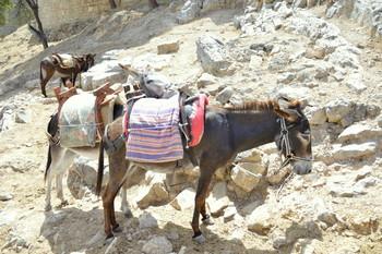 На острове Санторини туристам с лишним весом запретили кататься на ослах