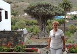 возраст драцены Драконово дерево около 3 тысяч лет