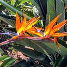Ботанический сад Фостера