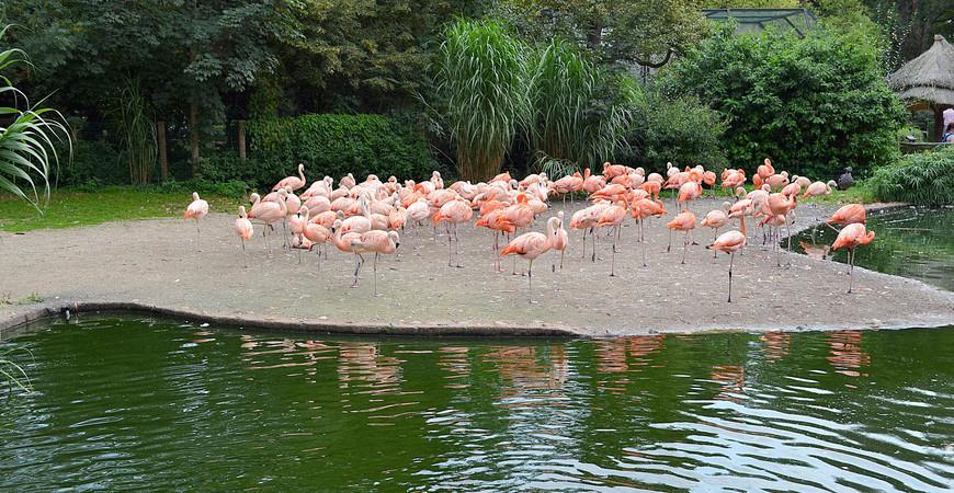 Зоопарк в Праге (Prague Zoo)