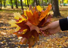 Золотая осень в средней полосе России