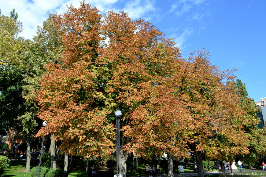 Почти все деревья на набережной во власти рыжего цвета.