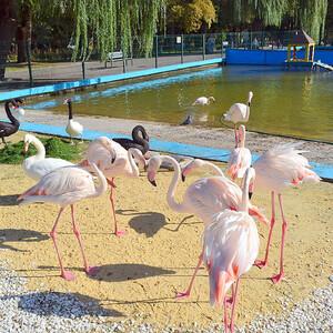 Фламинго нежатся на солнышке.