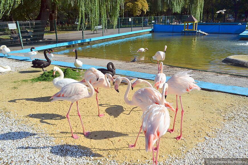 Вольер с фламинго и лебедями.
