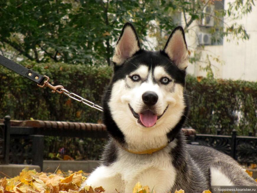 Собаке пришлась по-нраву кучка из рыжих листьев.