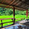 Кафе у рисовых террас