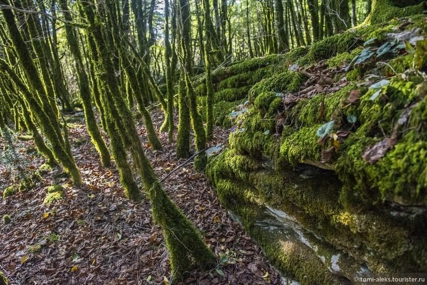 Пейзажи в этом месте удивляют своими непривычными формами. Здесь кругом все покрыто мхом, как в каком-то сказочном лесу... Хотя - это и есть лес. Просто не совсем обычный...