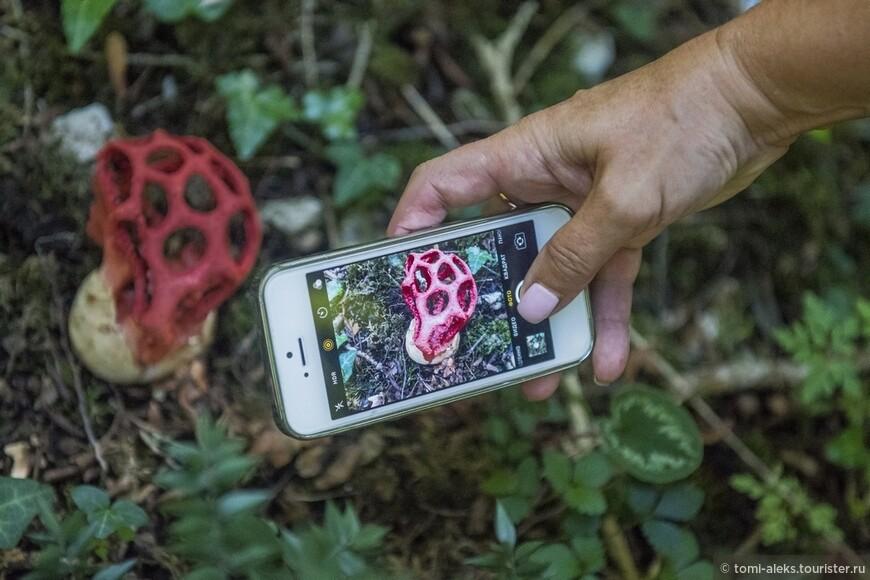 Все снимали вот такие диковинные грибы. Они нас удивили больше всего... Пришлось искать название этого редкого гриба в интернете...