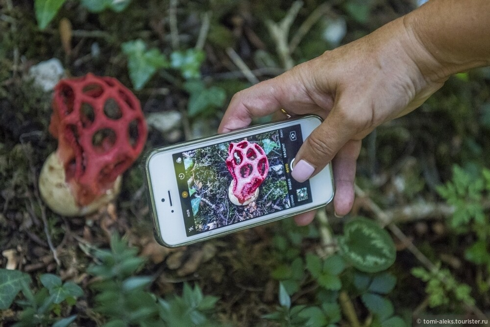 Все снимали вот такие диковинные грибы. Они нас удивили больше всего... Пришлось искать название этого редкого гриба в интернете..., Последам «Хроник Нарнии» вгорах Кавказа