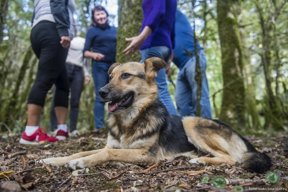 Чуть позже к нам присоединилась чудесная местная собачка... Она дожидалась своей порции сосисок..., Последам «Хроник Нарнии» вгорах Кавказа