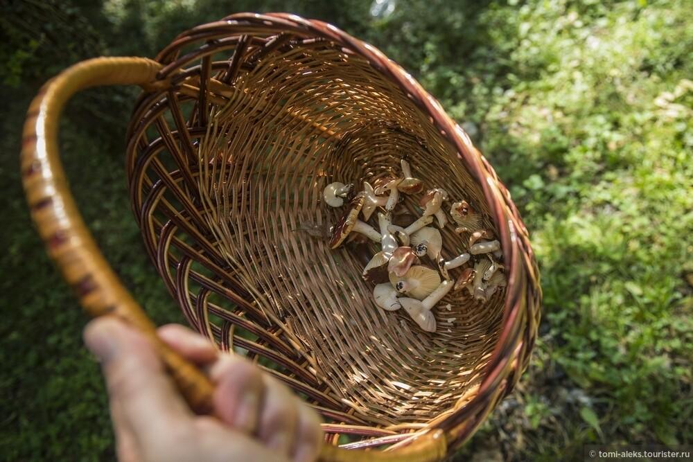 А вот и первые итоги у грибников., Последам «Хроник Нарнии» вгорах Кавказа