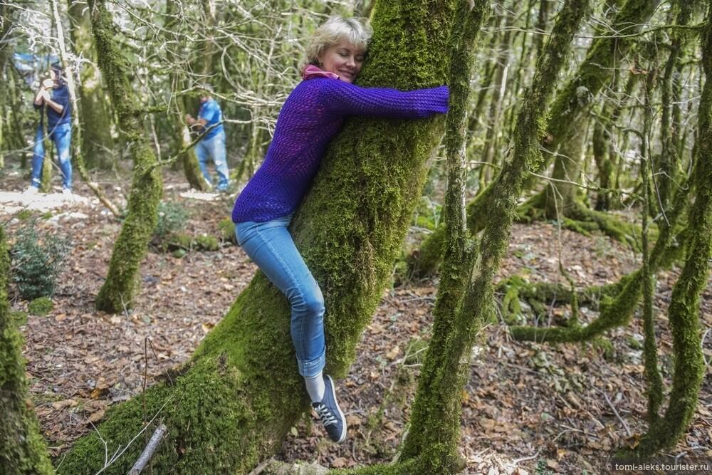 Народ с удовольствием обнимал сказочные и мягкие деревья..., Последам «Хроник Нарнии» вгорах Кавказа