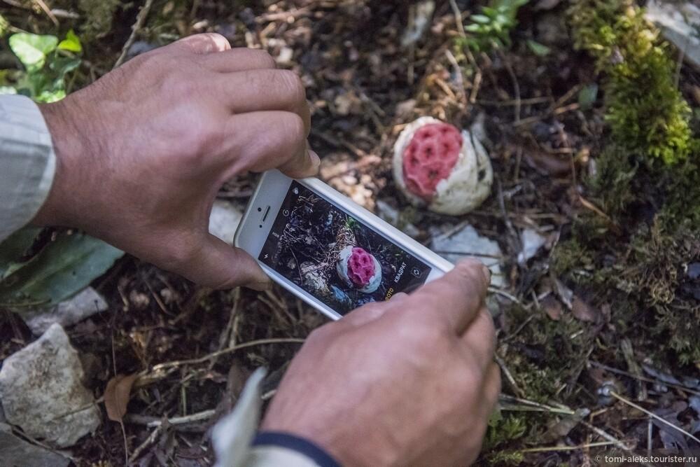 И вновь в кадре диковинные грибы. Как мы выяснили название этого гриба - решеточник красный..., Последам «Хроник Нарнии» вгорах Кавказа