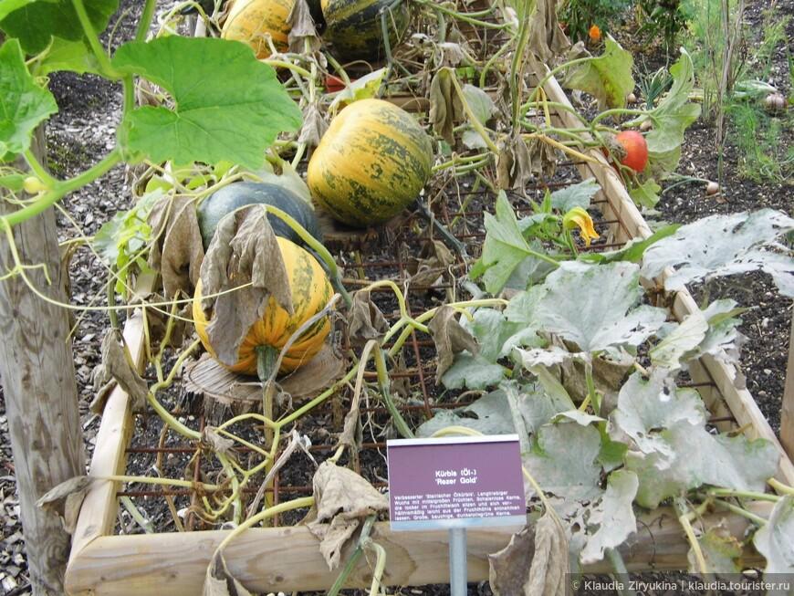 Ботанический сад не только для ботаников! Старейший в мире!
