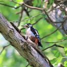 Природный орнитологический парк в Имеретинской низменности