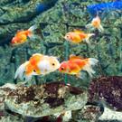 Океанариум Кипра