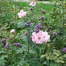Ботанический сад в Базеле