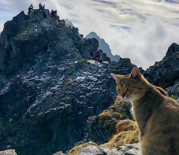 Кот-альпинист забрался на самую высокую гору Польши