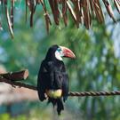 Амазонас парк