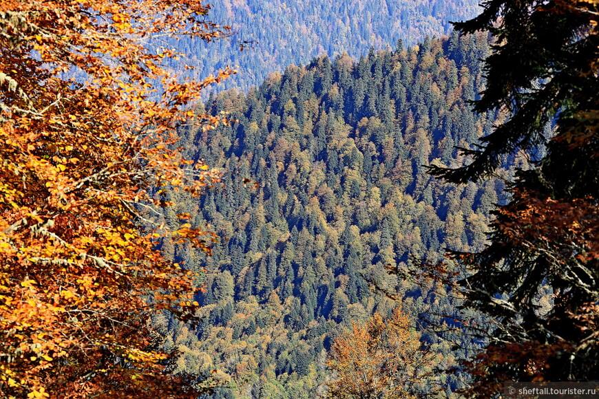 Ну что, что 3 лишних км, зато подробно рассмотрите узор осеннего лесного ковра.