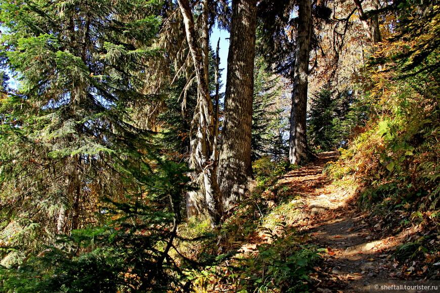 Несколько километров очень тяжкого подъёма сквозь лес. Но лес сказочный, не побоюсь этого слова.