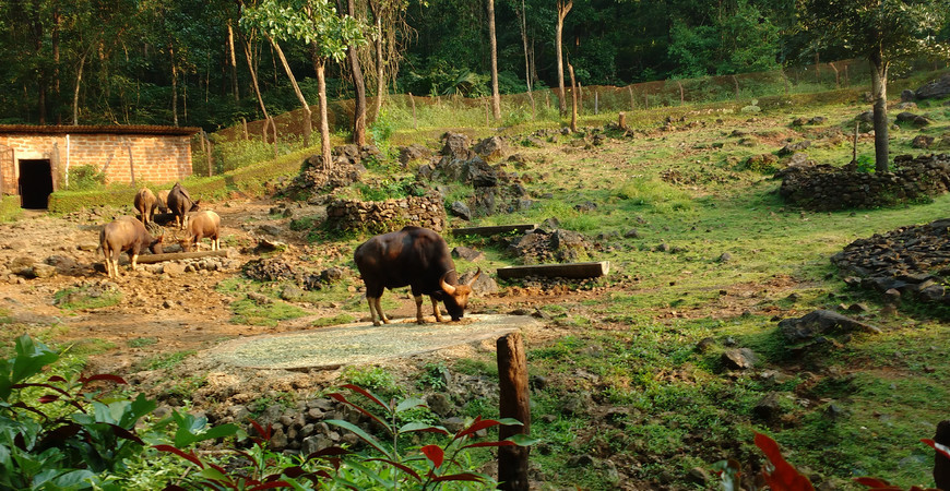 Заповедник Бондла (Bondla Wildlife Sanctuary)