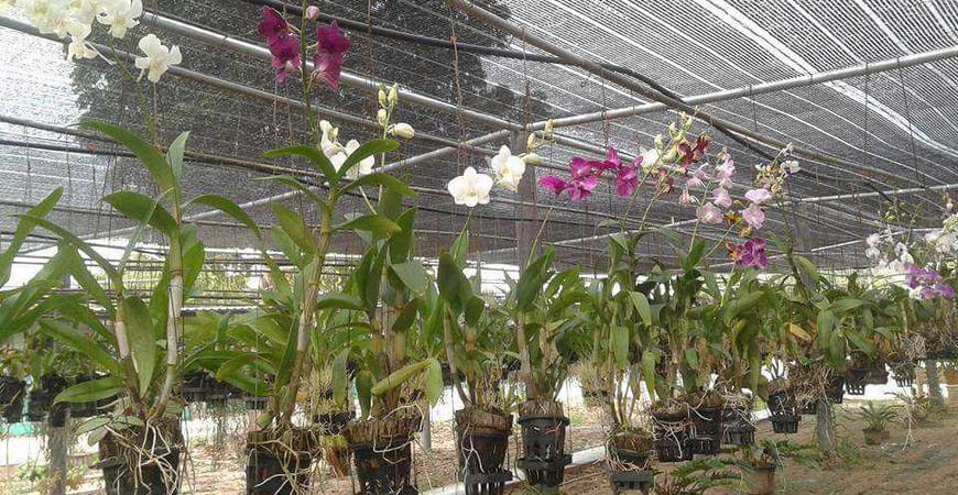 Ферма орхидей в Паттайе