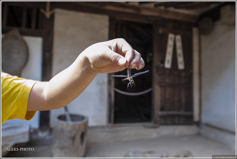 Дети везде любят потискать в руках мини вертолеты... Хотя стрекозку жалко..., Загадки корейской этно-деревни (часть вторая)