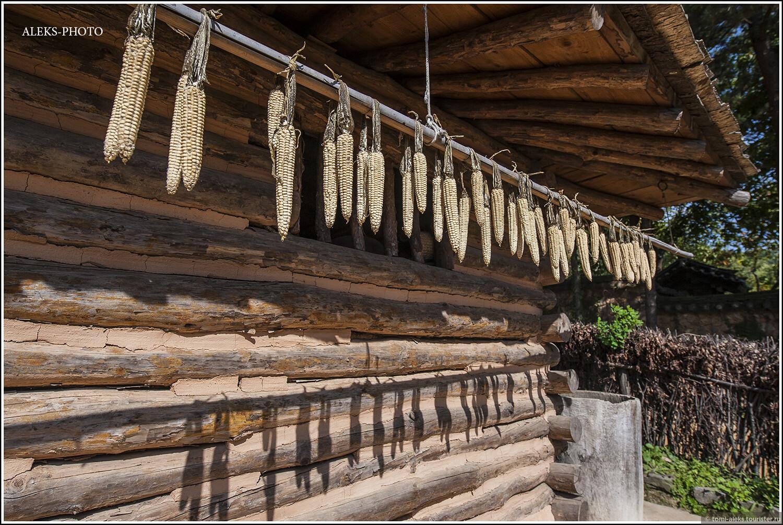 Кукуруза - точно так же висит рядами, как и в Пекине в деревне национальностей... А вот интересно, для кого предназначена такая вот сушеная кукуруза? Не проще ли ее отсоединить от початка... , Загадки корейской этно-деревни (часть вторая)