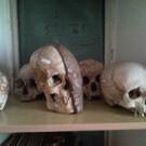 Крымский музей анатомии
