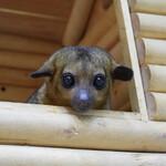Контактный 3D зоопарк «Зверюшки» в ТРЦ «Ривьера»