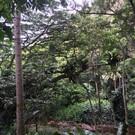 Парк штата Уэймея Каньон
