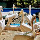 Зоопарк Бухареста