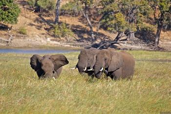 Определена лучшая страна Африки для сафари