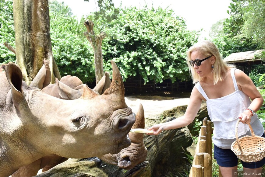 А вот носороги морковку уже не едят их кормили свеже нарезанной дыней ????.